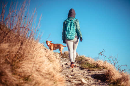 dog rock: Walking or running young woman with her dog on trail in mountains. Toned picture