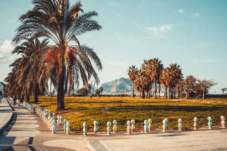 Palm trees in park near the sea in Palermo, Sicily island, Italy photo
