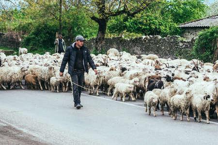 KAKHETI REGION, GEORGIA - APRIL 20, 2015: Georgian shepherd leads his goat and sheep flock in Kakheti region, Georgia, Caucasus Redakční