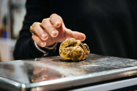 White truffles on sale at truffle fair in Alba, Italy. Foto de archivo