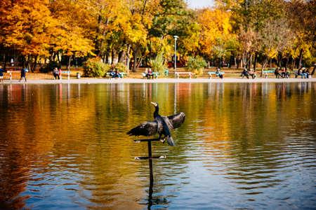 버드는 부다페스트, 헝가리의 도시 공원에서 날씨를 즐깁니다.