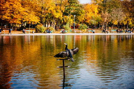 Bird enjoys the weather in the City Park of Budapest, Hungary. Stock Photo