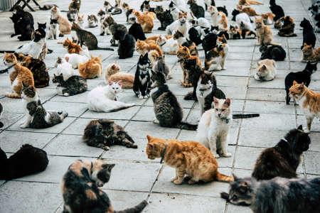 キプロスでマルコム ・猫の聖域の猫。 写真素材
