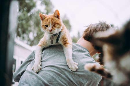 避難所で古い猫 写真素材