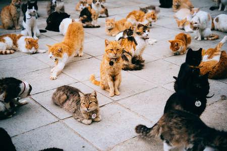 키프로스의 동물 보호소에있는 고양이.
