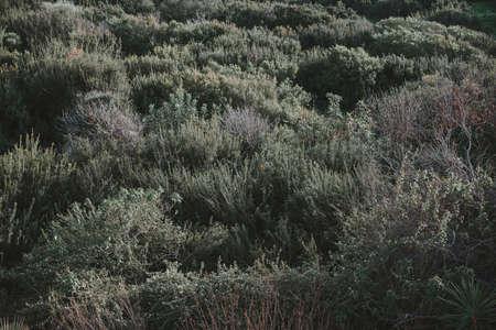 키프로스의 녹색 식물의보기입니다. 배경 톤 이미지 스톡 콘텐츠