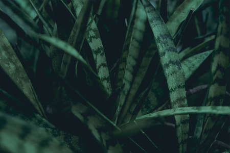 Green leaves. Low key modern style toned background image