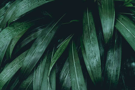 Green leaves. Low key modern style toned background image Banco de Imagens - 93885570
