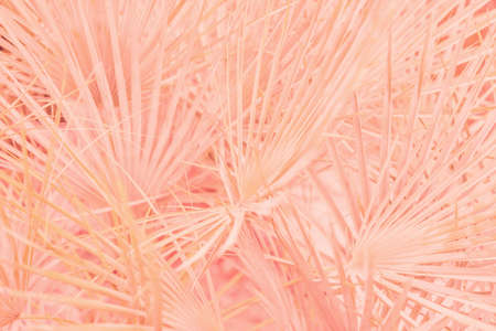 Pink tropical leaves background picture 版權商用圖片