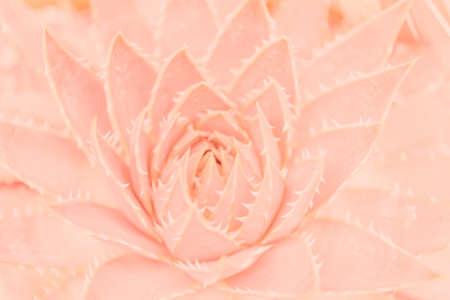 핑크 열대 낙엽 배경 사진