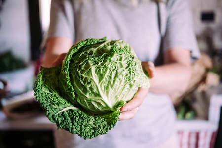 Hands holding savoy cabbage. Healthy eating concept. Stock Photo