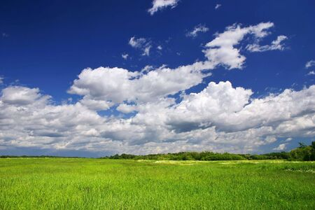 Green grass field with clouds in the background