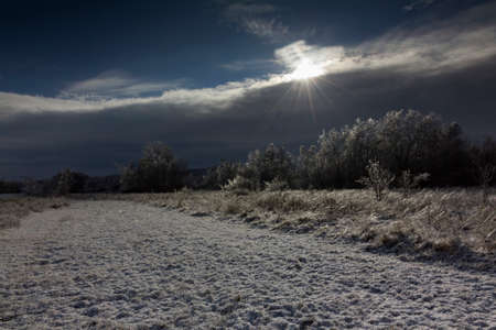 dark winter landscape, snowy and frosty photo