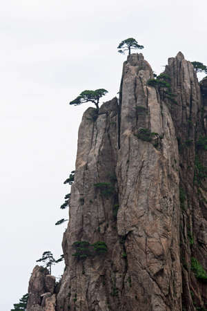 huang: Pines groiwng from vertical rock in Huang Shan mountains, Anhui province, China
