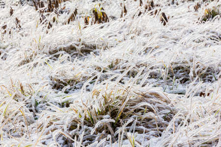 Close up photo of frozen grass in winter with particular blades enshrouded by thin layer of ice photo