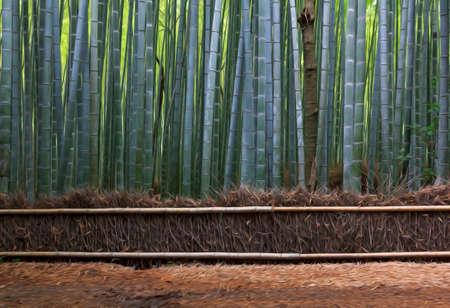 わらのフェンスと竹の森、様式化された、油絵のようにフィルター処理 写真素材