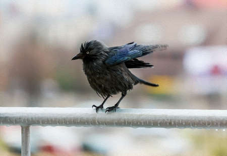 portrait of a miserable wet crow clutching frosted balcony rail in the rain and flapping its wings, stylized and filtered to look like an oil painting Stok Fotoğraf