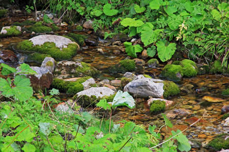 beautifu: Photo of a fragment of small  mountain stream with mossy rocks and lush vegetation, filtered and stylized to resemble an oil painting
