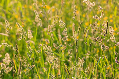lighted: grass in the meadow finely lighted by the setting sun