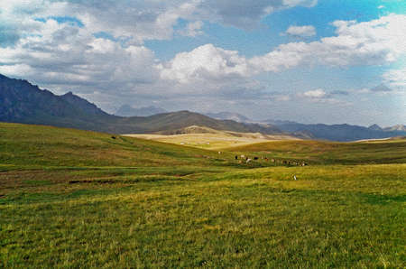 steppe: photo of Alay valley, Kyrgystan, stylized and filtered to look like an oil painting  In the foreground steppe, and small sihouettes of grazing cattle, in the background spectacular  mountains and clouds