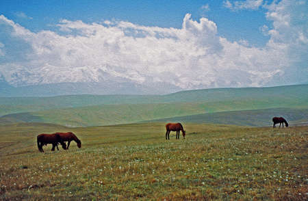 steppe: A photo of Alay valley, Kyrgystan, stylized and filtered to look like an oil painting  In the foreground nomads