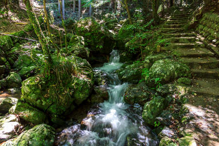 A stream with a small waterfall surrounded with lush green vegetation in a forest in Japan, near Kyoto  On the right a stone hiking trail is visible  photo