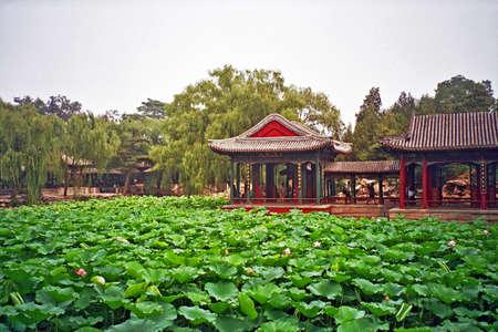 plantas acuaticas: pabellones de jard�n chino visto en todo el estanque cubierto de nenufars y plantas de agua en el palacio de verano, Pek�n, China