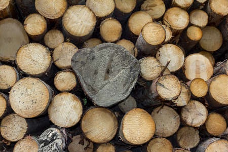 sawmill: Logs of spruce wood stacked together in a saw-mill