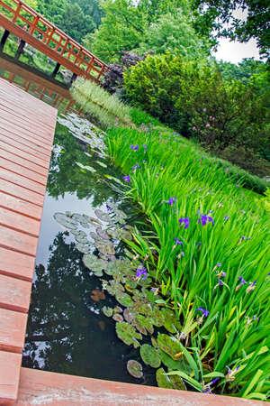 ponte giapponese: giardino giapponese - molo, rosso ponte giapponese e piante acquatiche belle e alberi