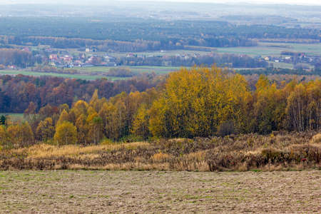 vast: Vast autumn landscape. In foreground field and birch forest, in background villages, meadows and forests