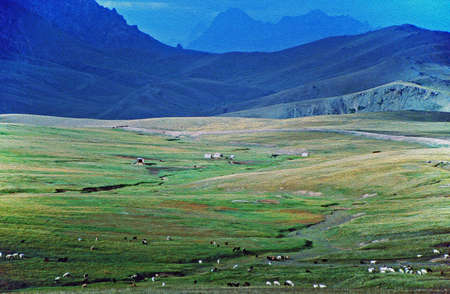 photo of Alay valley, Kyrgyzstan. In the foreground steppe, and small sihouettes of grazing cattle, nomad photo