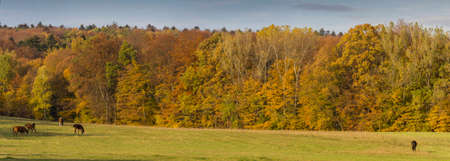 painting and stylized: Autumn Landscape,  stylized and filtered to resemble an oil painting. In the foreground meadow and some horses grazing, in the background wall of beautifully coloured autumn trees. Stock Photo