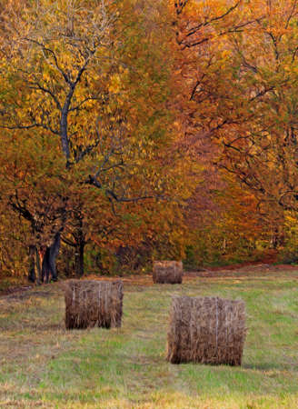 hay bales: Three bales of hay lying in the field with some trees covered with beautiful autumn forest in the background,  stylized and filtered to resemble an oil painting Stock Photo