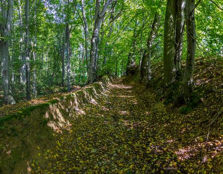 早期秋の森、渓谷、木々 を通して輝く光のパッチを介して実行経路を