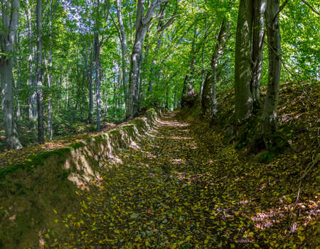Early autumn forest    with a pathway running through a gorge and patches of light shining through the trees