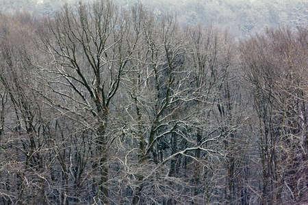 冬の森の雪、コントラストの高い写真で覆われた木の枝のフラグメント