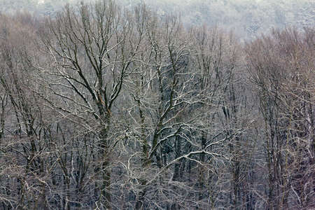 fragment of winter forest - tree branches covered with snow, high contrast photo Reklamní fotografie