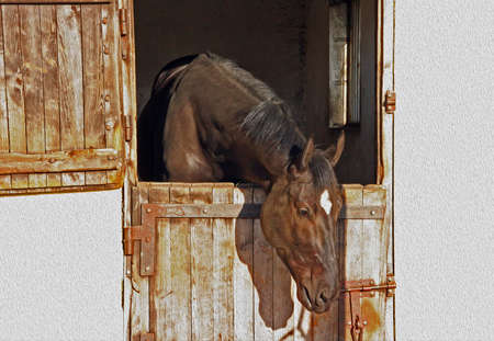 Horse protruding its head from the stable,  stylized and filtered to resemble an oil painting