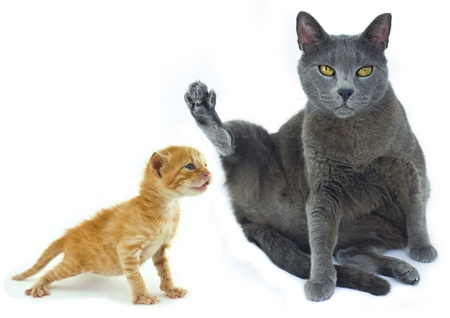 miao: Grey cat and ginger kitten Stock Photo
