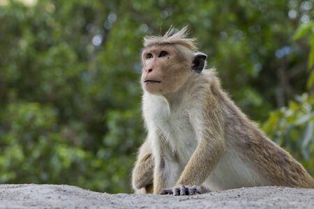 Monkey on green background