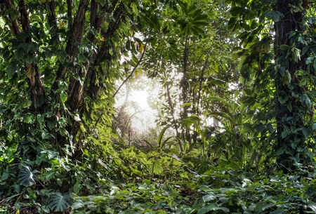 mystical forest: Green tropical rain forest with light shine through Stock Photo