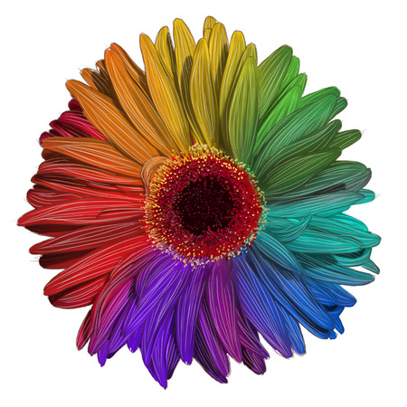 Drawing of colorful gerbera flower isolated on white background