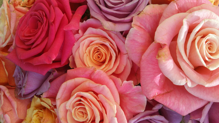 Floral background full of colorful old-fashioned pastel roses Stock Photo