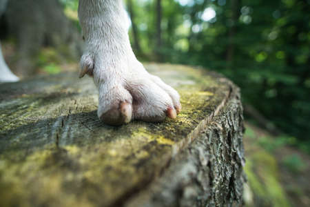 Closeup of dogs paw on the woods bench