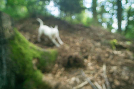 Dog running and playing in forest - in blur