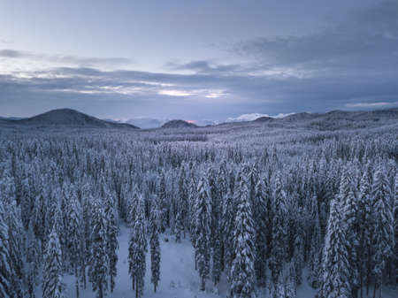 Snow covered winter forest landscape aerial view with pines and mountains in the background. Cold morning sunrise with alpenglow.