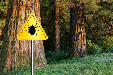Tick insect warning sign in infected forest. Lyme disease and meningitis transmitter.