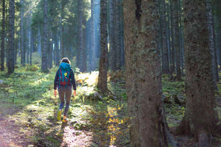 Hiker woman with backpack walking on path and exploring summer spruce forest. Enjoying the pristine nature.