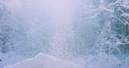 Winter Sun Shining Through Snowfall with trees on a cold morning. 4k resolution Reklamní fotografie