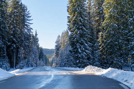 Road through snowy forest in winter on a beautiful sunny morning.